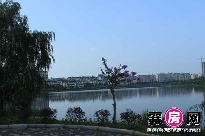 东湖国际花园望湖树荫实景(2013-07-01)