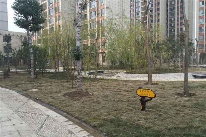 小区绿化(2015-12-10)